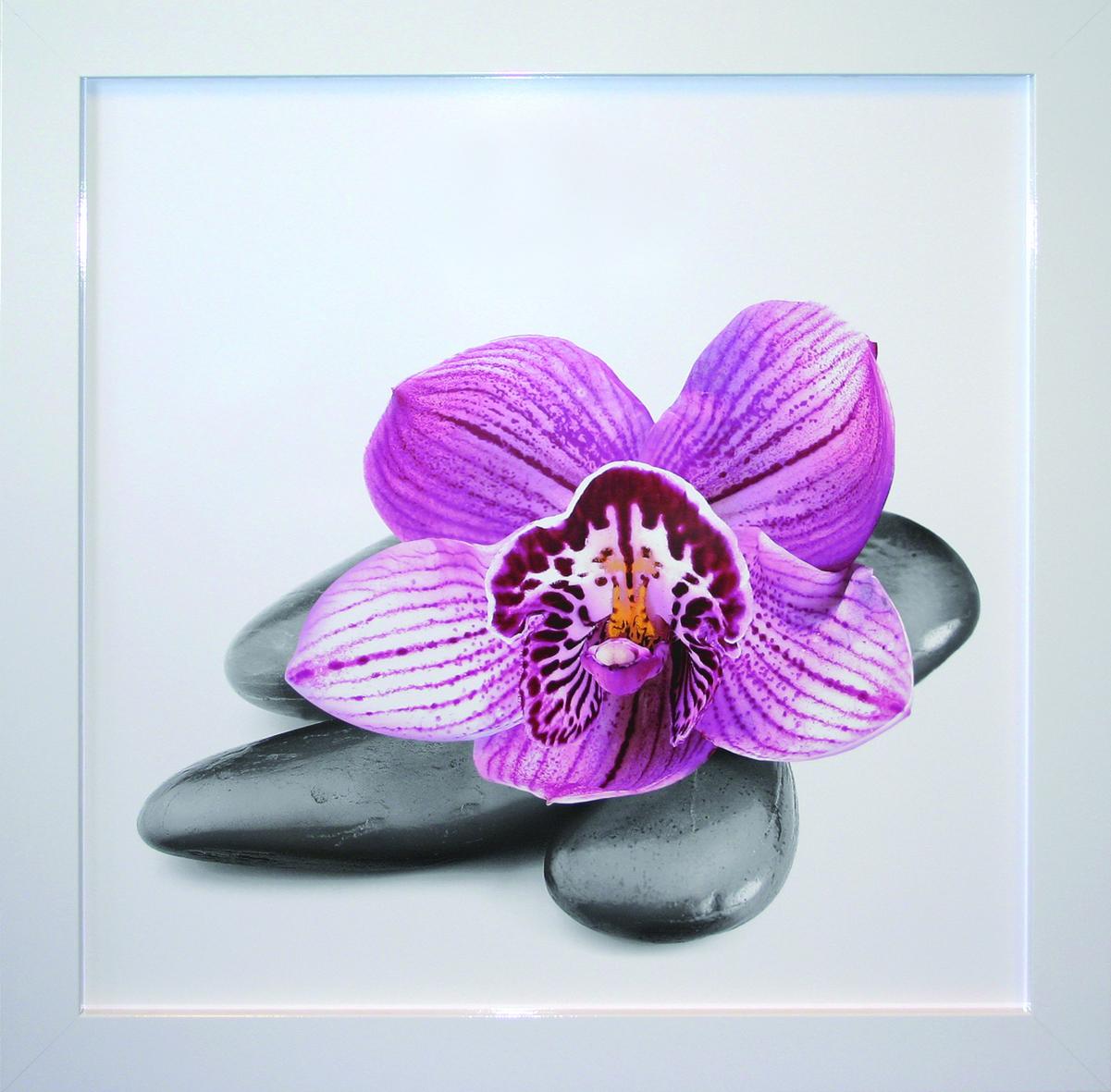kunstdruck gerahmt wohnzimmer bild wandbild bilder mit rahmen orchidee natur neu ebay. Black Bedroom Furniture Sets. Home Design Ideas